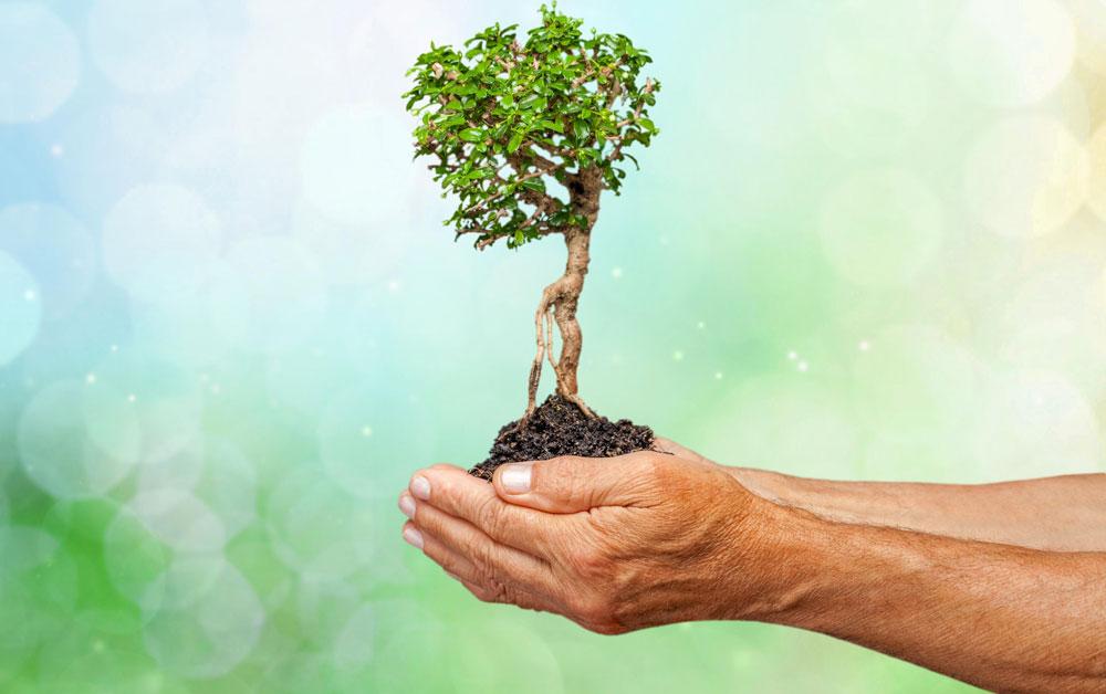 Kleiner Baum von Händen gehalten
